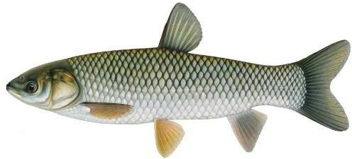 названиями картинки река рыбы с